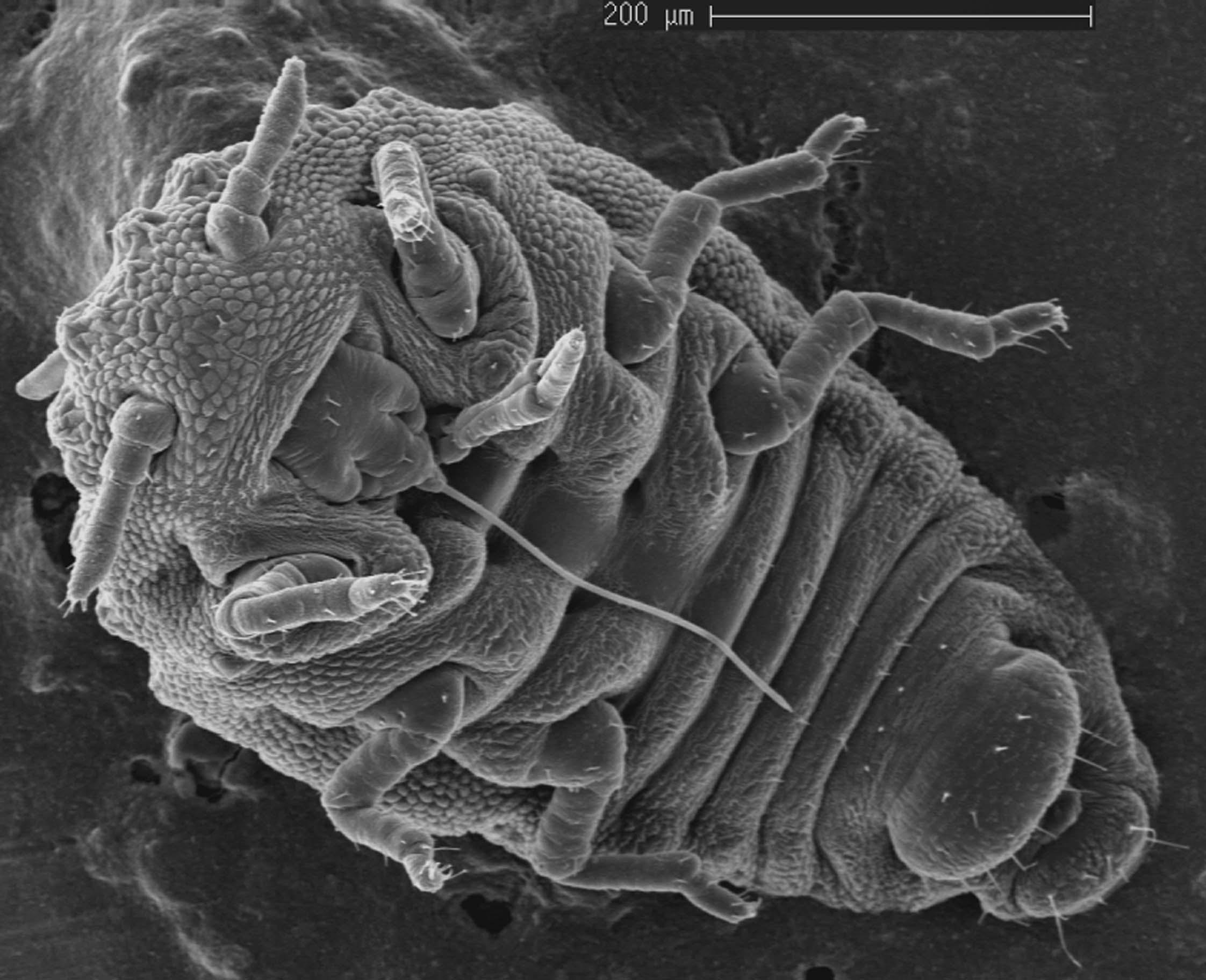 Phylloxera Vinehealth Australia