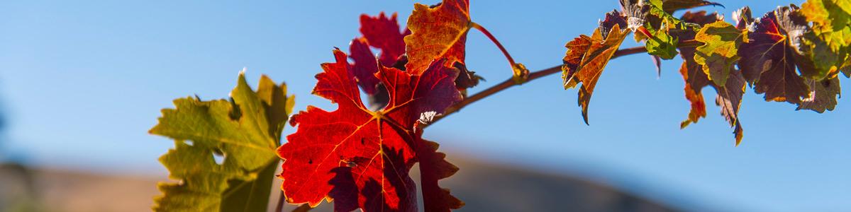Vinehealth Australia